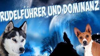 Download Rudelführer und Dominanz in der Hundeerziehung! / Mythos oder Realität? Video