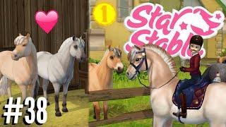 Download Welke NIEUWE FJORD ga ik KOPEN?! | Star Stable #38 Video