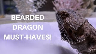 Download BEARDED DRAGON MUST HAVES | he's back... Video