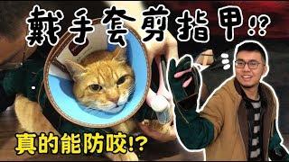 Download 【黃阿瑪的後宮生活】戴手套剪指甲!終於能不被咬了? Video