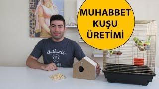 Download Muhabbet Kuşu Üretimi Video