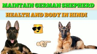 Download How to take care German Shepherd in Hindi || how to maintain German Shepherd health and body Video