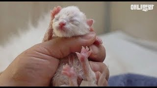 Download 뒤 바뀐 아기 고양이의 운명 ㅣ What This Tiny Kitten's Mom Had To Go Through Is... Video