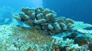 Download Seychelles, un ejemplo de conservación de nuestros océanos Video