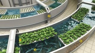Download GREAT WATER TANK FISH AQUAPONICS SYSTEM DESIGN Video