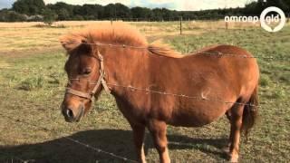 Download Sinds april zes paarden mishandeld Video