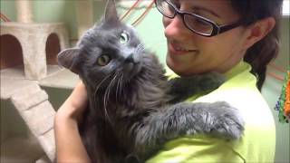 Download Adopt a senior cat! Video