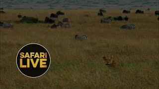 Download safariLIVE - Sunset Safari - August 29, 2018 Video