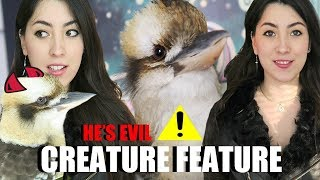 Download LOUDEST Bird Ever! | Laughing Kookaburra | Creature Feature (Includes Feeding) Video