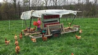 Download 100 Laying Hens on Pasture with Rollout Nest Boxes Video