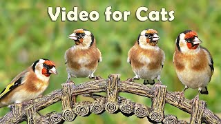 Download Videos for Cats to Watch Birds : 8 HOURS at Goldfinch Garden Video