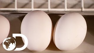 Download EGGS | How It's Made Video