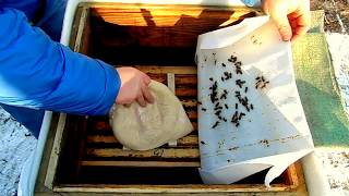 Download Зимовка пчёл на улице.Раздача канди. Video
