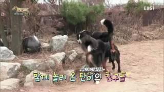 Download 세상에 나쁜 개는 없다 - 대형견과 아기의 위험한 동거 #001 Video