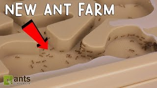 Download MY FIRE ANTS' NEW ANT FARM! Video