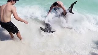 Download 10 Ft. Hammerhead Shark Pulled to Beach by Brave Teen Video