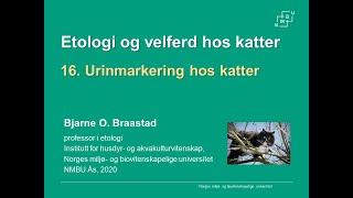 Download Urinmarkering hos katter Video