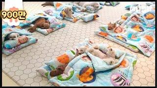 Download 얘네 여름 이불로 바꿈요ㅋㅋㅋㅋ(맞아요 박보검이 다니는 그 유치원) ㅣ Doggies Got A NEW Summer Blanky To Enjoy Nap Time Video
