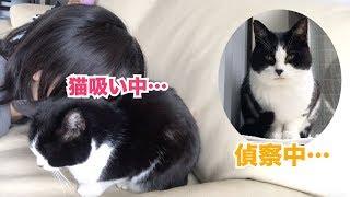 Download 今朝の猫とのおしゃべり、そして猫吸い Video