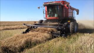 Download Canola Camp Video 2016 Video