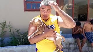 Download Escolhendo o melhor cão da ninhada - As famosas mordidinhas e o xixi no lugar certo! Video