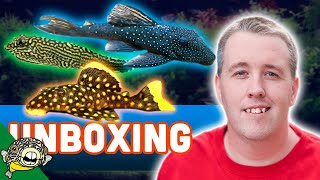 Download FISH UNBOXING - FANCY PLECOS Video