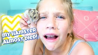 Download My Hamster Almost DIED! Shopping for Hamsters Bigger Cage at PetSmart Video