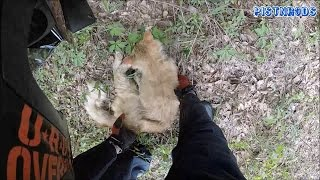 Download Motorcyclist Saves Cat! Video