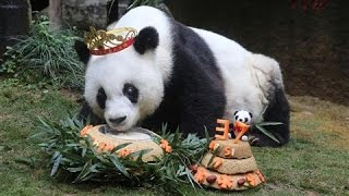 Download World's Oldest Panda in Captivity Turns 37 Video