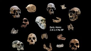 Download Origins of Genus Homo–Southern Africa and Origin of Homo; Adaptive Shifts; Energetics and Ecology Video