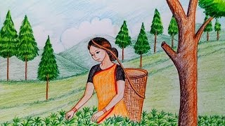 Download How to draw scenery of tea garden step by step Video