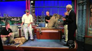 Download Anatolian Shepherd Dog protects the Cheetah from extinction.. Video