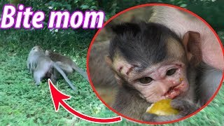 Download Why Don't Pity baby monkey? - Please stop, Pity baby monkey, TM #346 Video