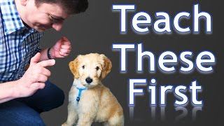 Download 3 Easy Things to Teach your NEW PUPPY! Video
