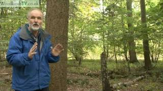 Download Valuing Trees - what is a tree worth? Video