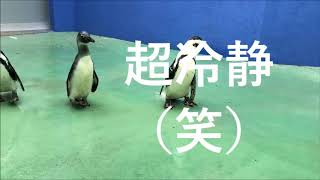 Download ゆづちゃん、お散歩デビュー(伊勢シーパラダイス) Video