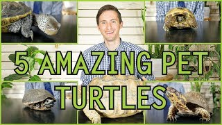 Download Five of the Best Pet Turtles You Could Possibly Get! Video