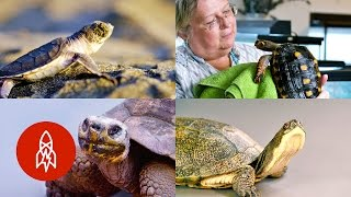Download Turtles and Tortoises: Stories of Our Friends in Shells Video
