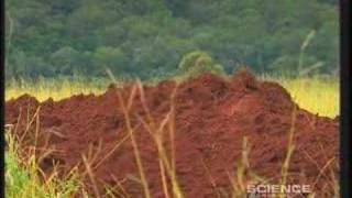 Download Giant Ant Colony Video