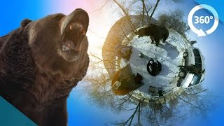 Download Survive a Bear Attack in VR! ( 360 3D Video ) Video