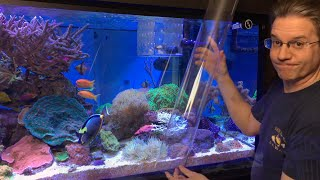 Download ClownTube Slide - Adding clownfish to an anemone with a big clear pipe Video