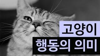 Download (랭킹박스) 고양이가 하는 행동의 의미 Video