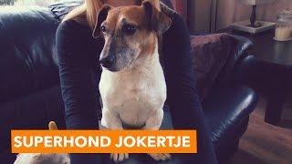 Download Superhond Jokertje | PaardenpraatTV Video