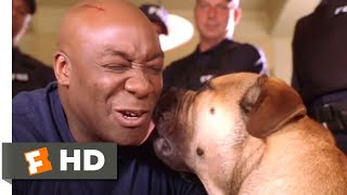 Download See Spot Run (2001) - He Needs a Family Scene (8/8) | Movieclips Video