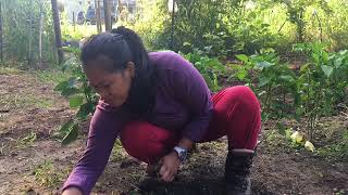 Download Husband And Wife Planting Garden Together Dearly's Turn To Ramble Video