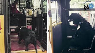 Download This Smart Dog Takes The Bus All By Herself Every Day To Go To The Dog Park Video