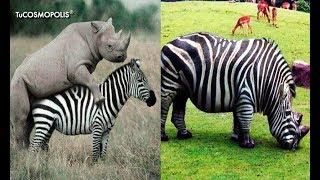 Download 7 ANIMALES HÍBRlDOS que NO CREERÁS que EXISTEN Video