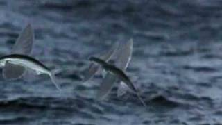 Download Life - Flying Fish Video