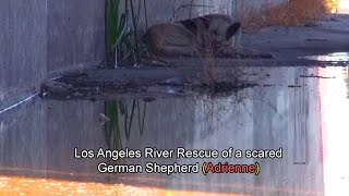 Download Hope For Paws: Los Angeles River Rescue of a scared German Shepherd (Adrienne). Please Share. Video