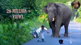 Download Elephant Chasing Due To Foolish Activity. Video